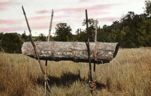 Colmena natural en tronco de árbol