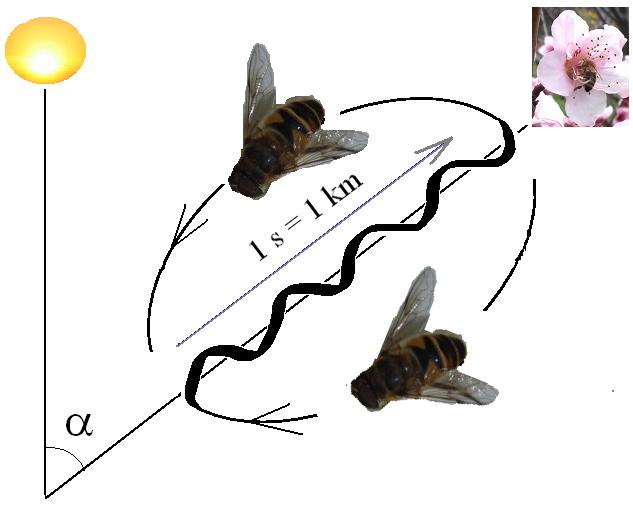 Baile abejas